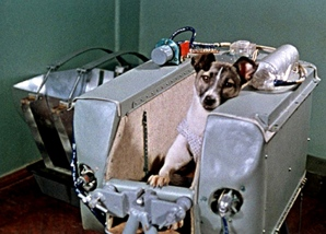 Laika, cão no espaço